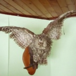 Чучело птиц, Самара