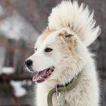 Эмми собака, Самара