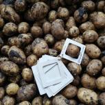 Картофель, Самара