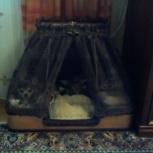 Делаю любые домики для животных ., Самара