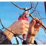 Обрезка-формировка плодовых деревьев, Самара