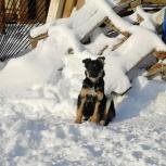 Очаровательная малышка собача Сметанка в поисках дома, Самара