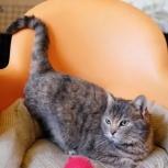 Кошка Шерон, Самара