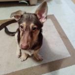 Отдам бесплатно щенка  5 месяцев в добрые рук, Самара