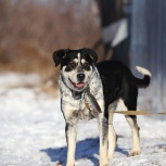 Молодая сильная умница собача бамбина ищет дом, Самара