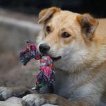 Солнечная собача Рыжуля ищет любящий дом!, Самара