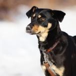 Идеальная собака для семьи джулия ищет любящий дом, Самара