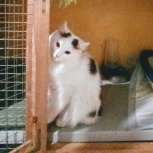 Кот гоша, Самара