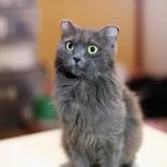 Кошечка Миринда, Самара