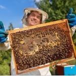 Пчелопакеты. Здоровые рабочие пчелы, Самара