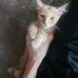 Котенок мальчик ищет заботливую семью, Самара