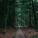 Проект освоения лесов, Самара