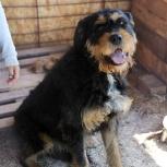 Громозека собака, Самара