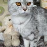 Кошка Коша . Отдам в добрые руки, Самара