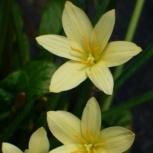 Экзотические растения, Самара