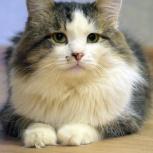 Котик лёва, Самара