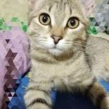 Кошечка, Самара