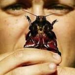 уничтожение мышей клопов самара дезинсекция тараканов, Самара