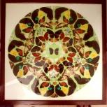 Уникальные панно из крылышек тропических бабочек, Самара