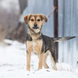 Пес со светлой душой Морозко очень хочет в семью, Самара