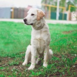 Дрессировка собак в самаре кинолог передержка, Самара