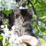 Котик и кошечки пушистые, Самара