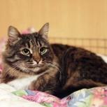 Кошка Вакцина. Отдам в добрые руки, Самара