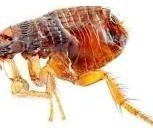 дезинфекция тараканов, Самара
