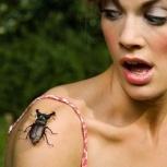 избавление от тараканов Дезинсекция мух,клопов, Самара