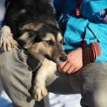 Милая веселая собача Джина ищет любящий дом, Самара