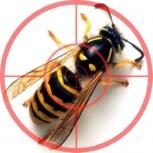 Уничтожение ос шершней шмелей и других насекомых, Самара