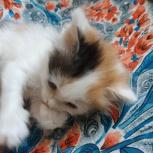 Котенок-девочка в самые добрые руки, Самара