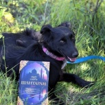 Скромная трогательная собача Шенни ищет любящую семью, Самара