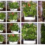 Красивый бизнес gardenwall, доступен каждому (ищем представителей), Самара