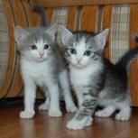 Котята в добрые руки, Самара