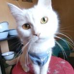 Кошка Белочка, Самара