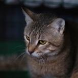 Крутой кот батыр ищет ласковую семью!, Самара