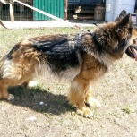 Айседора собака, Самара