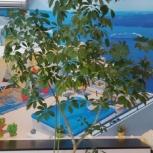 Продаю крупные комнатные растения, Самара