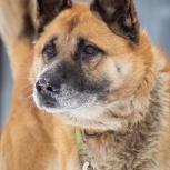 Надежный друг и отличный охранник пес Дик ищет дом, Самара