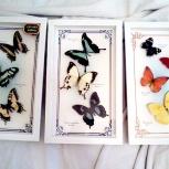 Оригинальные рамочки с тропическими бабочками для интерьера, Самара
