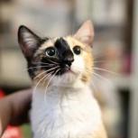 Кошка Весна, Самара