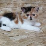 Плюшевое чудо котик, Самара