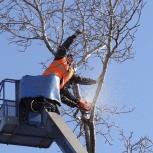 Спил, кронирование деревьев. Расчистка территории, Самара
