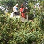Спил, обрезка деревьев, вывоз спила в Самаре, Самара