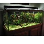 Обслуживание аквариумов, Самара