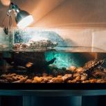2 черепахи красноухие и аквариум, Самара
