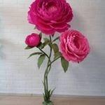 Ростовые цветы от лилии, Самара