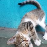 Котенок ищет дом, Самара