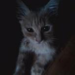Котенок даром, Самара